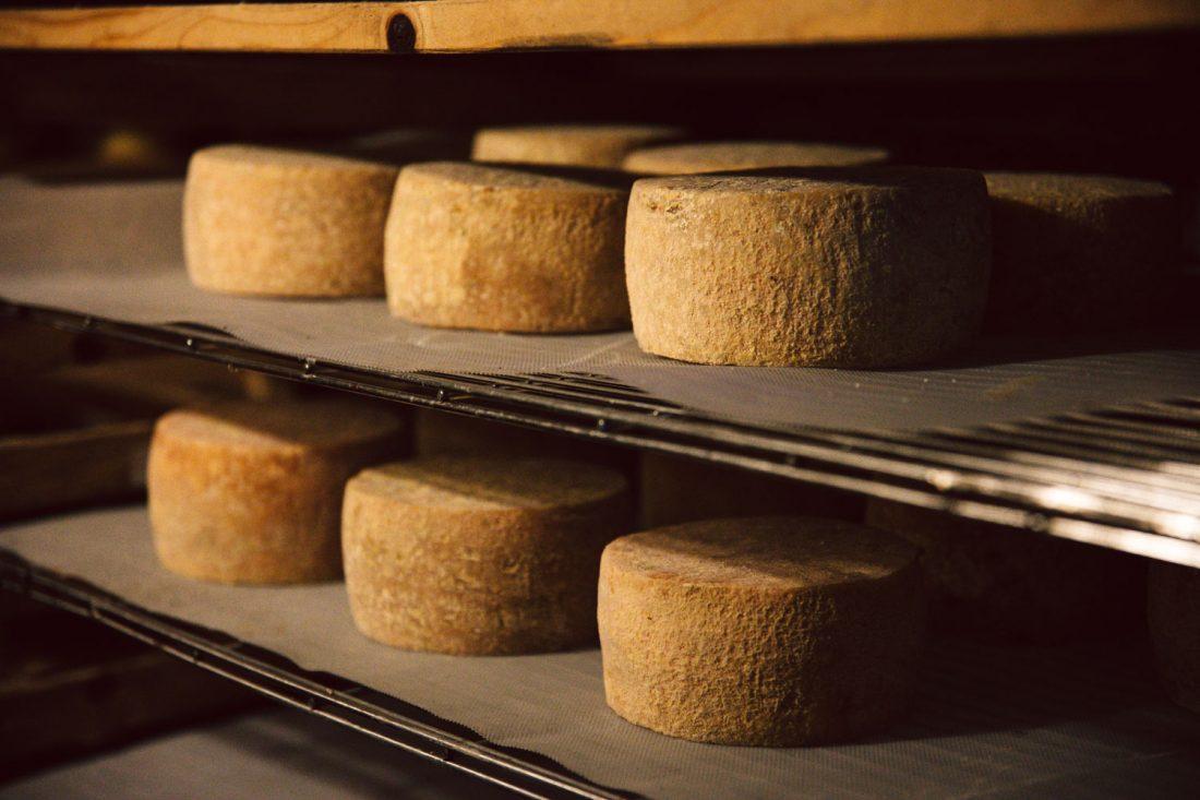 Der junge Käse der Hofkäserei Linda in Linda bei Weida muss mehrere Wochen im Keller reifen.